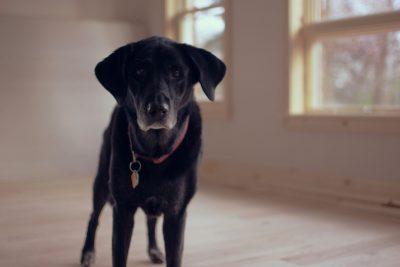 Pořiďte si tzv. hlídacího psa, protože stanovení výše nájemného vyžaduje neustálé sledování aktuálního dění na realitním trhu. Nabídky podobné té vaší vám budou chodit přímo do e-mailu.